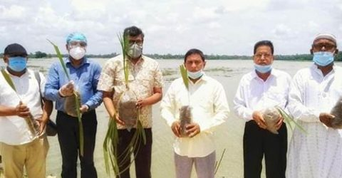 """তালগাছ রোপন করলেন জেলা আ""""লীগের সাধারন সম্পাদক"""